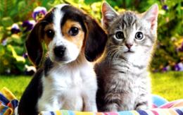 Repelentes de Gatos y Perros